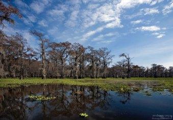 Озеро Каддо на востоке Техаса образовалось естественным путем, а в конце 19-го века было запружено из-за построенной дамбы (рядом нашли нефть).