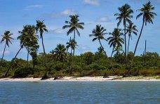 Пальмовое побережье Мексиканского залива.