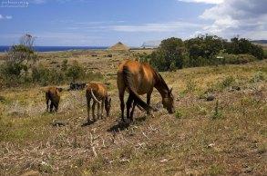 Лошади - практически единственная живность, оставшаяся на острове.