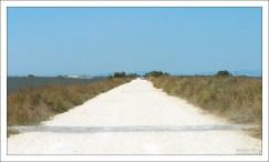 Грунтовая дорога в заповеднике Camargue Nature Park.