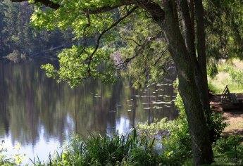 Умиротворенные деревья на берегу Игуменского озера.