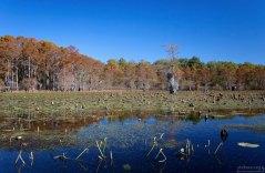 Каддо - единственное озеро в Техасе, возникшее естественным путем.