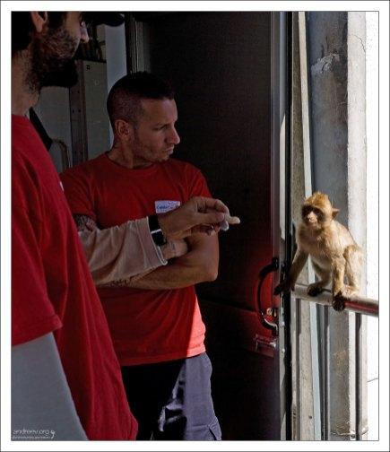 Штраф за кормление обезьян - 500 фунтов стерлингов.