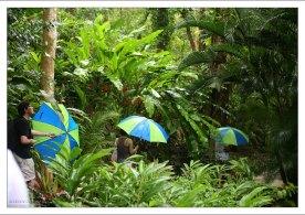 Прогулка по тропическому лесу. Заповедник Flower Forest.