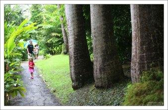 На тропе Palm Trees walk. Заповедник Flower Forest.