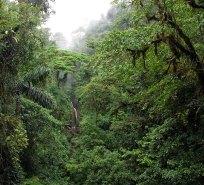 Утренний туман над джунглями и небольшой водопад.
