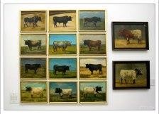 Изображения особо отличившихся в корриде быков.