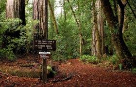 Тропа-кольцо вокруг самых высоких деревьев на Земле. Redwood National Park.