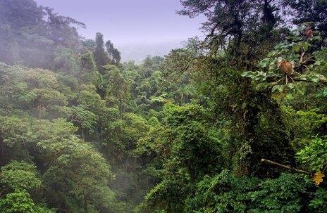 Ливень в джунглях. Без укрытия можно промокнуть до нитки за минуту.