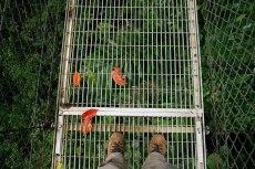 Подвесной мост, натянутый на высоте 50 метров над землей.