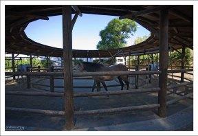 """Лошади в прогулочной """"вертушке""""."""
