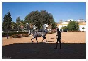 Разминка Андалузской лошади перед выступлением в Королевской школе верховой езды.