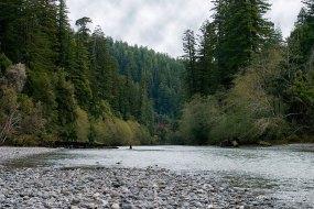 Богатая форелью речка Redwood Creek. Redwood National Park.