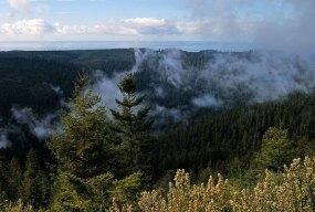 Утренний туман в парке. Redwood National Park.