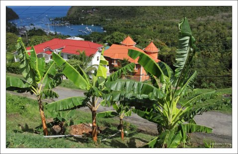Банановая плантация на пути к заливу Мариго.