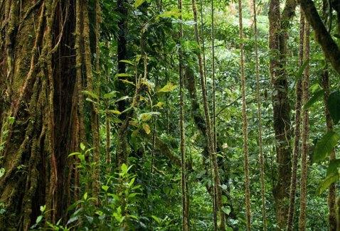 Влажный тропический лес Монтеверде.
