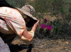 Фотографов за уши не оттащить от кактусов.