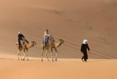 Туристы пытаются управлять верблюдами.