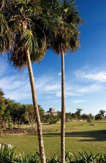 Пальмы на входе в археологический парк Тулум.