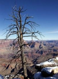 Зимний страж Гранд каньона.
