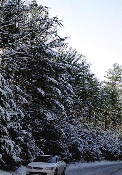 Зима в парке.