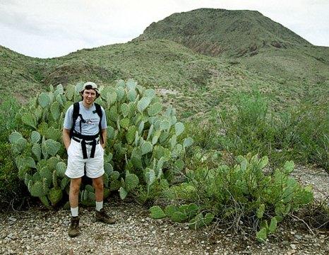 Грушевидный кактус в человеческий рост. Пустыня Chihuahuan desert.