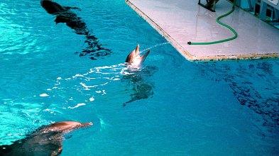 Жажда дельфина. Gulfarium, Fort Walton Beach.