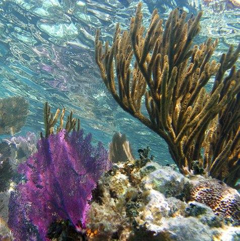 Самый верхний слой кораллового рифа.