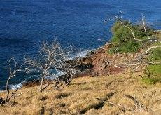 Сухие деревья на южном склоне вулкана Халеакала.