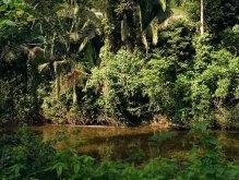 Непроходимые джунгли.