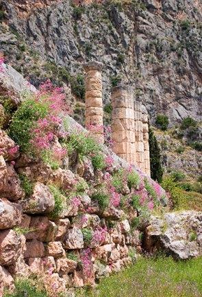 Колонны Храма Аполлона и весенние цветы.