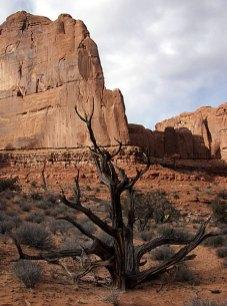 Высохшее дерево на тропе Park avenue.