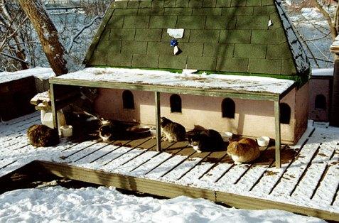 Приют для бездомных кошек около Парламента. Живется им там очень хорошо, судя по толщине каждого отдельного кота.