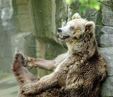 Медведь с русской душой.