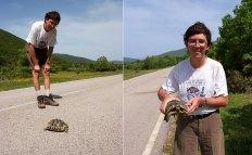Греческая черепаха с ассистентом :) Vikos-Aoos National Park.