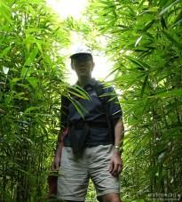 """На тропе к """"Четырем водопадам"""" через бамбуковый лес."""