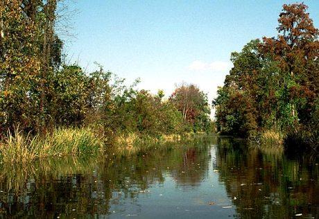 В тихих заводях озера Reelfoot Lake.