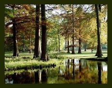Остров кипарисов. Озеро Reelfoot Lake.