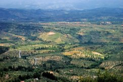 Оливковые сады и горная гряда Taygetos Mountains.