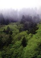 Утренний туман. Панорама с дороги Newfound Gap road. Great Smoky Mountains.