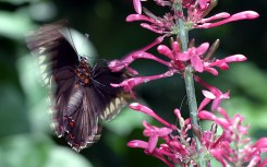 Портрет бабочки с претензией на художественность.