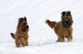 Собачье счастье. Национальный парк Gran Paradiso.