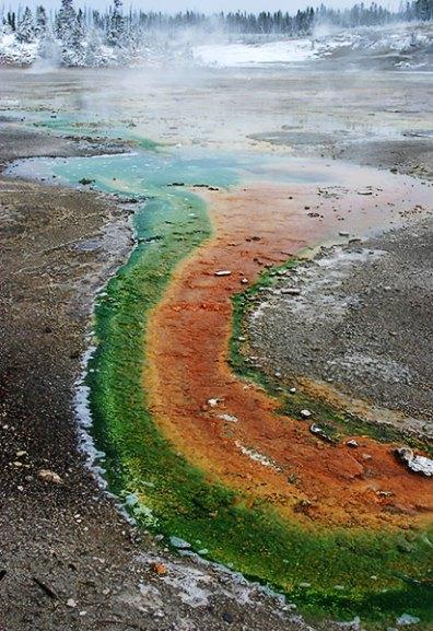 Зеленые и красные водоросли, поселившиеся в одном роднике. Фарфоровый бассейн.