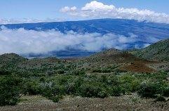 По пути на гору Mauna Kea (высота 13,796 футов ~ 4,2 км). Mauna Kea State Park.