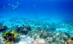 Рыбий исход. Coral Gardens, Барьерный риф.