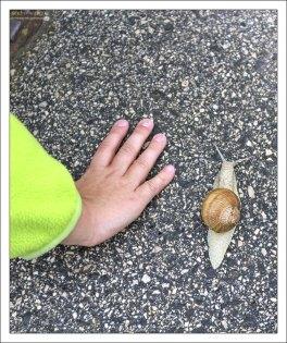 Гигантская улитка, размером с детскую ладонь.
