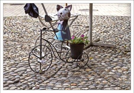 """Забавный кот у входа в кафе """"Rege""""."""