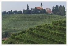 Виноградники в районе словенского Иерусалима.
