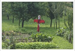 Чучело в огороде с кухонными травами.