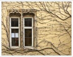 """Шпалера - специальный способ выращивания """"плоских"""" деревьев."""